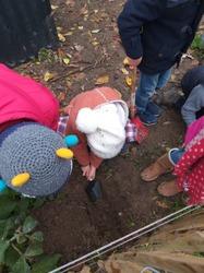 Nous terminons doucement les plantations d'automne, les arbustes fruitiers sont en place