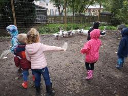 18 octobre 2019, visite de l'élevage de nandous et quelques autres animaux chez Brayden à Mille.